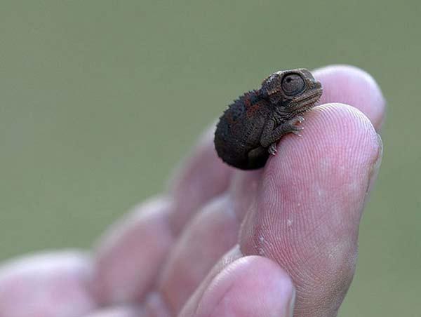 perierga.gr - Γλυκύτατα νεογέννητα ζώα του 2012 που θα... κάψουν καρδιές!