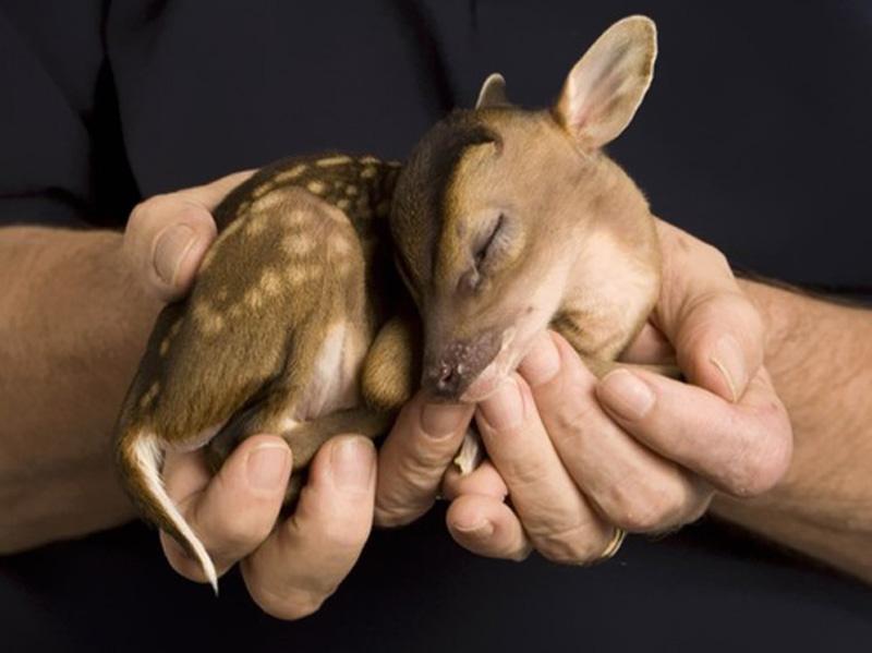 Γλυκύτατα νεογέννητα ζώα του 2012 που θα... κάψουν καρδιές!