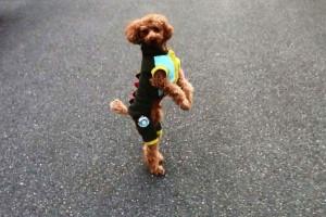 perierga.gr - Το σκυλί που τρέχει... σαν άνθρωπος!