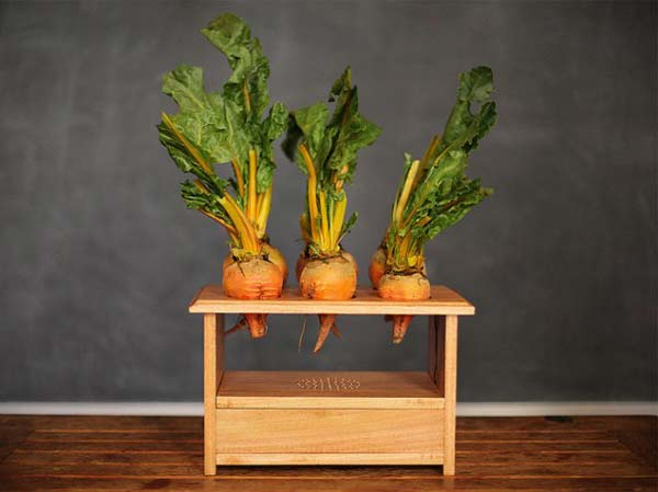 perierga.gr - BeetBox: Μουσικά λαχανικά!