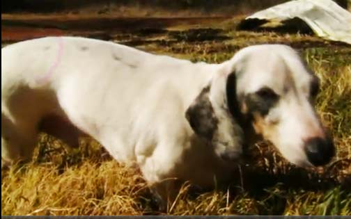 Ανάπηρη σκυλίτσα σώζει την οικογένειά της από τις φλόγες!