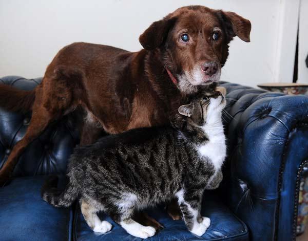 perierga.gr - Τυφλός σκύλος βλέπει με τα μάτια μιας... γάτας!