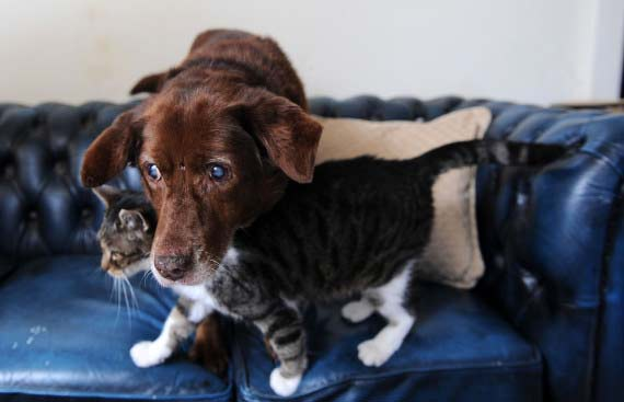 """Κι άλλες (εκπληκτικές) φωτογραφίες με τον τυφλό σκύλο και τη γάτα που τον """"οδηγεί""""!"""