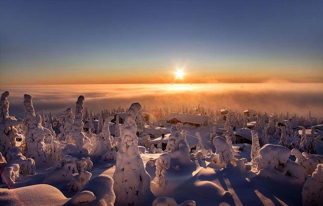 Perierga.gr - Το μαγικό δάσος της Λαπωνίας!