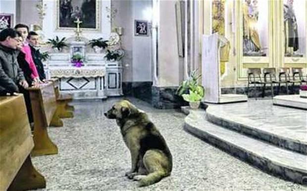 perierga.gr - Σκύλος παρακολουθεί τη λειτουργία στη θέση της νεκρής ιδιοκτήτριάς του!