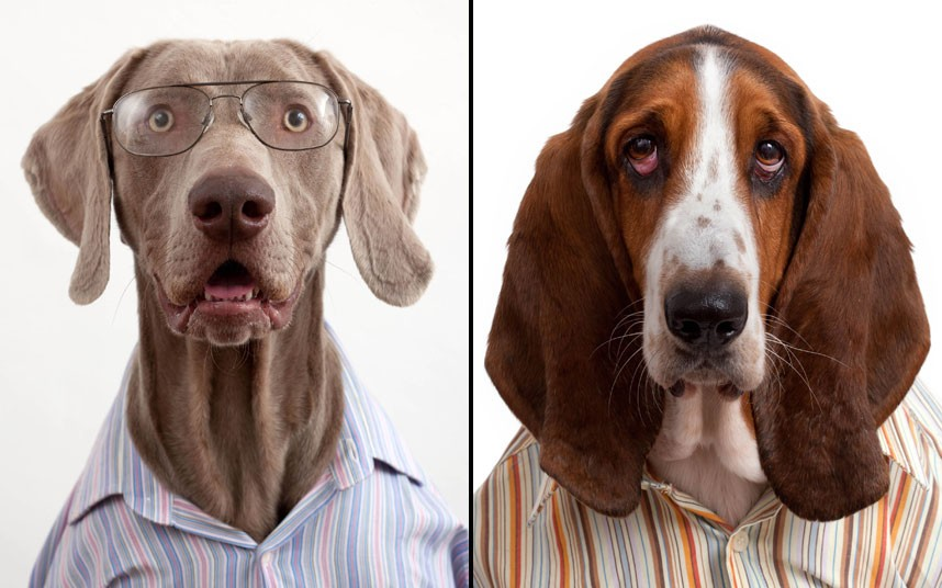 perierga.gr- Σκυλιά με... κολάρο και γραβάτα!