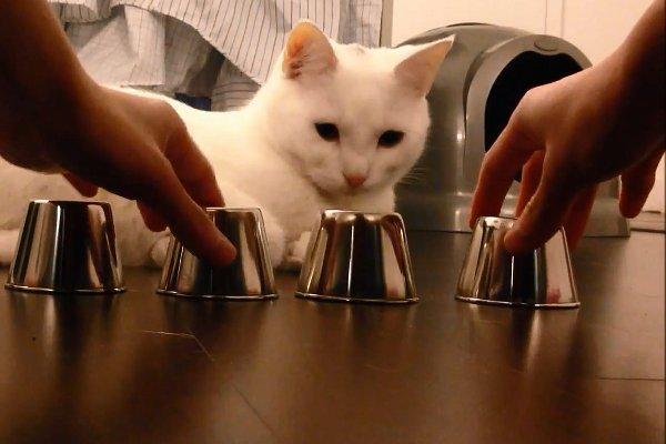 perierga.gr - Γάτος αυθεντία στα παιχνίδια μνήμης επιδεικνύει το ταλέντο του!