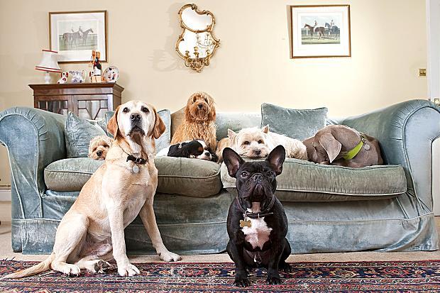 """perierga.gr - Ο """"Οίκος του Κοπρίτη"""" προσφέρει... σκυλίσια ζωή!"""