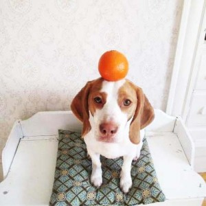perierga.gr - Ο σύλος και το πορτοκάλι!