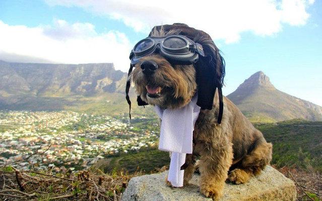 perierga.gr - Όσκαρ, ο πιο πολυταξιδεμένος σκύλος στον κόσμο!