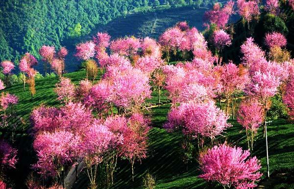 """perierga.gr - Θεαματικό """"ροζ"""" τοπίο στην Κίνα!"""