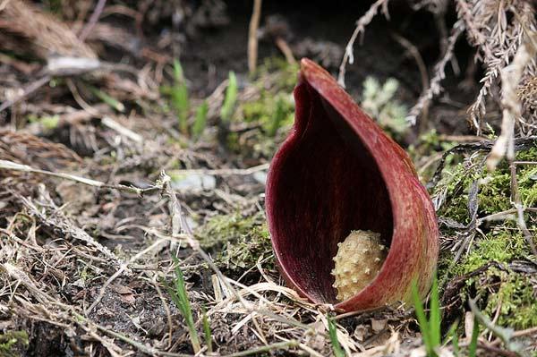 """perierga.gr - 8+1 πιο """"βρομερά"""" λουλούδια του πλανήτη!"""