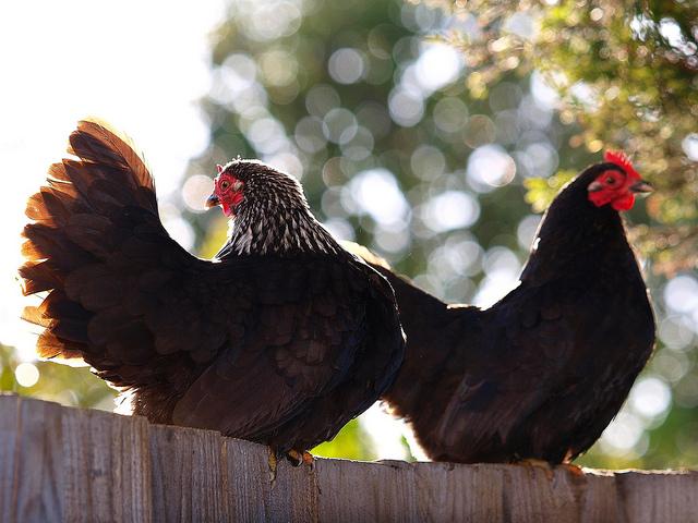 perierga.gr - Απαντήσεις σε 8... απλές απορίες για τα ζώα!