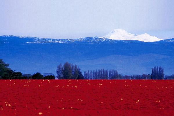 perierga.gr - Ξεχωριστές σημαίες κρατών στη φύση!