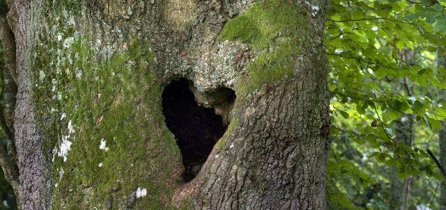 Perierga.gr - Η ρομαντική πλευρά της Φύσης!