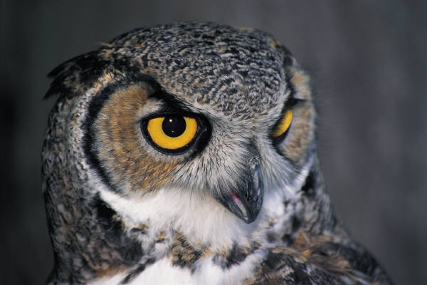 Perierga.gr - Γιατί τα ζώα βλέπουν καλύτερα στο σκοτάδι;