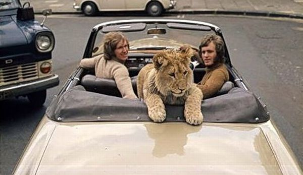 perierga.gr - Κρίστιαν το λιοντάρι: Μια συγκινητική ιστορία!