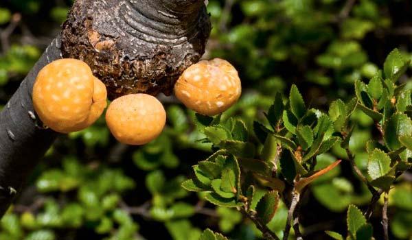 "perierga.gr - Τα παράξενα ""πορτοκάλια"" του Δαρβίνου!"