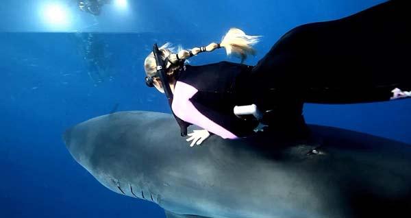 perierga.gr - Κολυμπώντας παρέα ένα λευκό καρχαρία!
