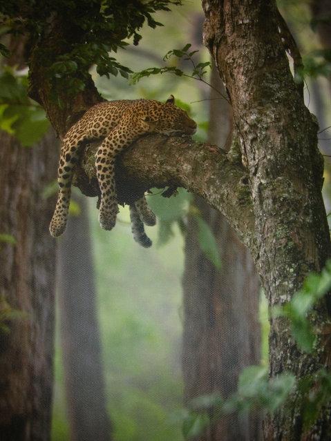 Τα ζώα ειδικεύονται στην... τέχνη του ύπνου!
