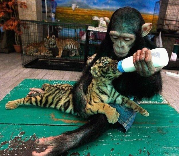 perierga.gr - 15+1 στοργικά ζώα που κλέβουν καρδιές!
