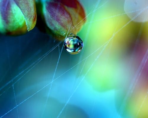 perierga.gr - Ανακαλύπτοντας τις μικροσκοπικές λεπτομέρειες της φύσης!
