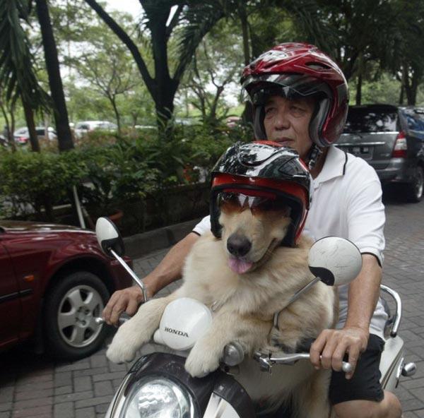perierga.gr - Ένας σκύλος... μηχανόβιος!