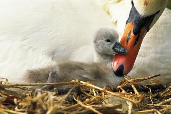 perierga.gr - Η αγάπη της μάνας στο ζωικό βασίλειο!