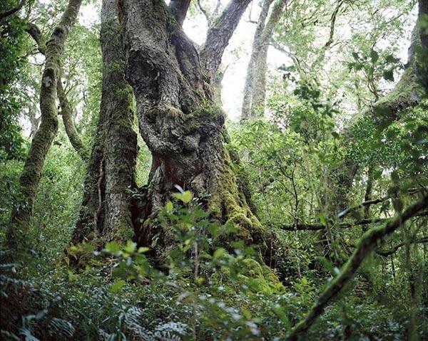perierga.gr - Οι παλαιότεροι ζωντανοί οργανισμοί της Γης!