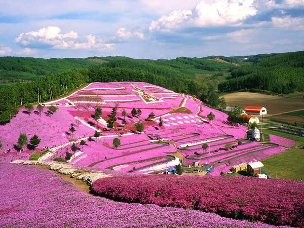 perierga.gr - Ανθισμένος παράδεισος σε ροζ αποχρώσεις !
