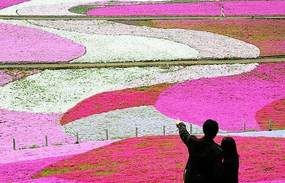 perierga.gr - Ανθισμένος παράδεισος σε ροζ αποχρώσεις!