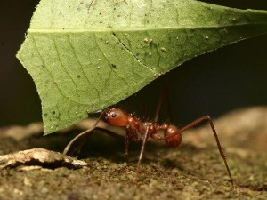 perierga.gr - Τα μυρμήγκια γνωρίζουν μαθηματικά!