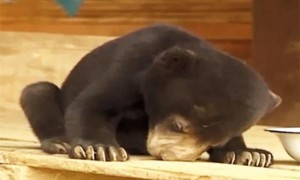 perierga.gr - Νυσταγμένα ζώα προσπαθούν (σκληρά!) να μείνουν ξύπνια!