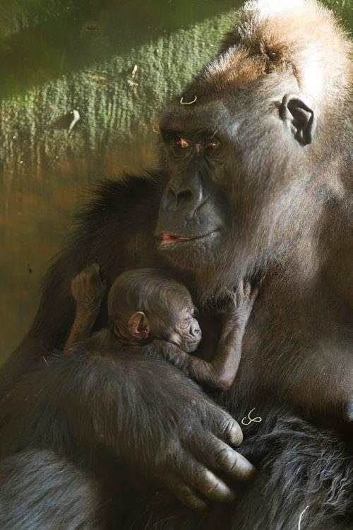 perierga.gr - Τα top 10 πιο επικίνδυνα ζώα που είναι αξιαγάπητα ως κουτάβια!