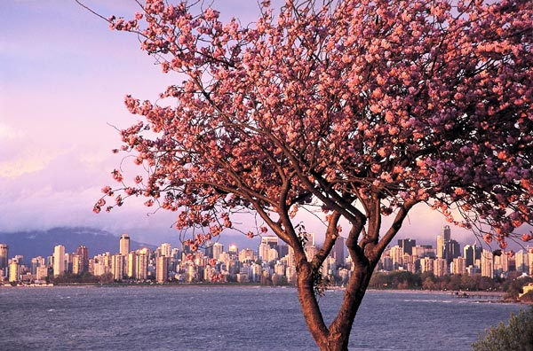 perierga.gr - Cherry Blossoms in various cities of the world!