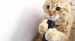 Αστεία γάτα παίζει με την ηλεκτρική