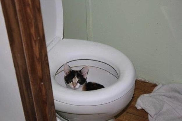 perierga.gr - 15 γάτες που βρέθηκαν σε ασυνήθιστα... σημεία!