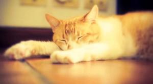 perierga.gr - 10 οδηγίες μακροζωίας από μια... γάτα!