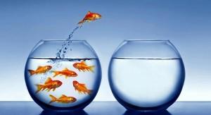 fishbowl1-300x163.jpg