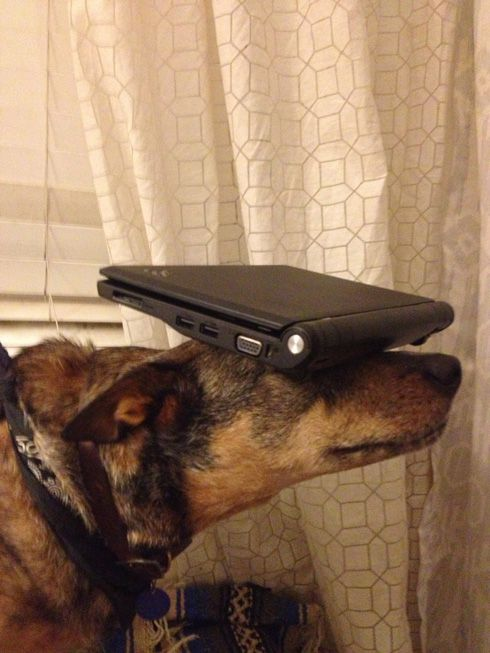 perierga.gr - Σκύλος με ταλέντο στην... ισορροπία!