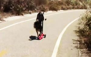 perierga.gr - Τα απίθανα κόλπα ενός σκύλου σε ένα βίντεο!
