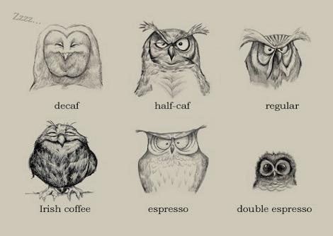 perierga.gr - Οι συνέπειες του καφέ μέσα από τα μάτια μιας... κουκουβάγιας!
