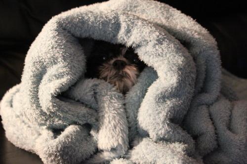 perierga.gr - Σκύλοι που απέτυχαν παταγωδώς στο... κρυφτό!