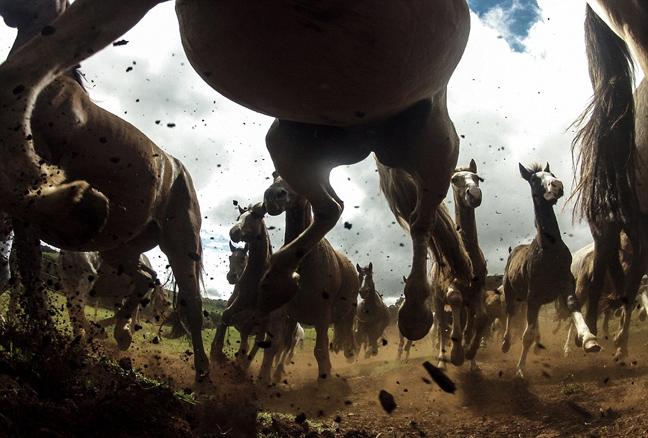Perierga.gr -  Συγκλονιστικές εικόνες από διαγωνισμό του National Geographic