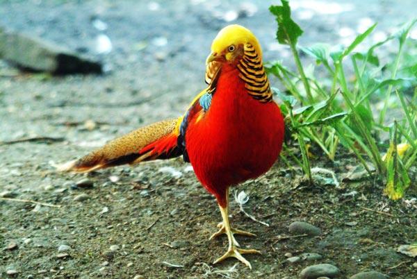 perierga.gr - 10 πτηνά κερδίζουν τη μάχη των... αποχρώσεων!