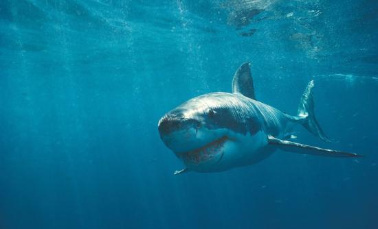Perierga.gr - Οι καρχαρίες καταδύονται για να αποφύγουν την πανσέληνο!