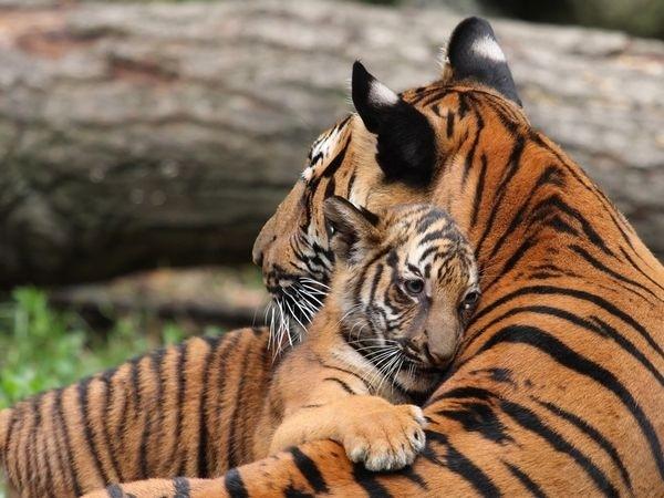 perierga.gr - 15+1 ζώα που ξέρουν τι θα πει αγάπη!