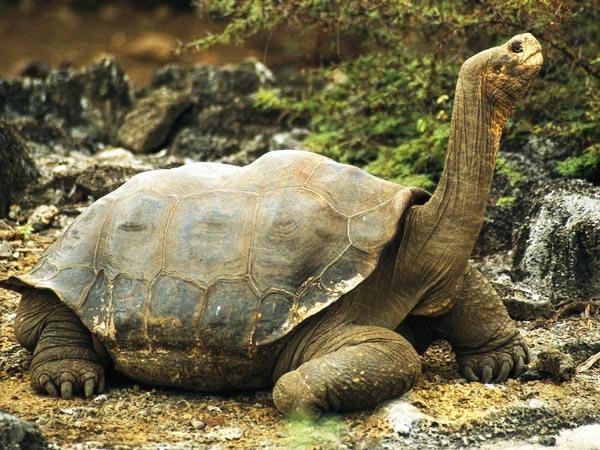 perierga.gr - 10 άγνωστα ζώα... μαθουσάλες!