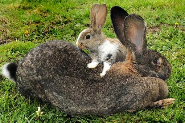 perierga.gr - Τα μεγαλύτερα ζώα στον κόσμο σπάνε ρεκόρ!