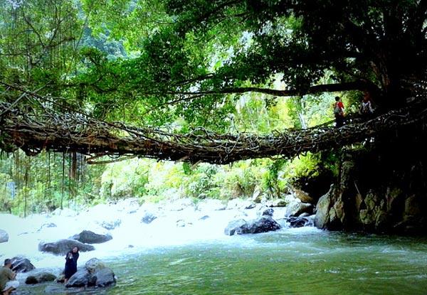 perierga.gr - Jembatan Akar: Η ζωντανή γέφυρα της Ινδονησίας!